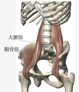 はじめの一歩通信vol21姿勢改善~腸腰筋を働かせる~