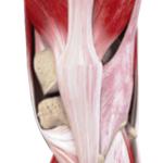 膝前面の筋