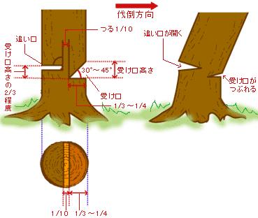 松の木の伐採 | 一鍼灸院