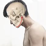 頭蓋骨が前方に傾き下顎が後方に引かれた状態